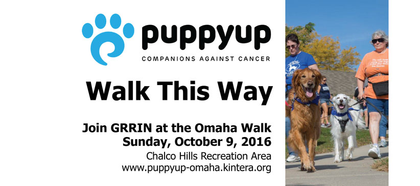 omaha-puppy-walk-slider-2016-web