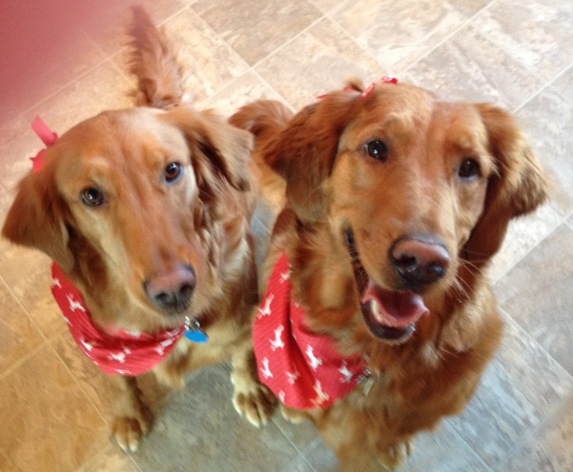 13-29 Honey and 13-30 Peaches (Honey) Lexi and (Peaches) Kaya adopted together sisters littermates