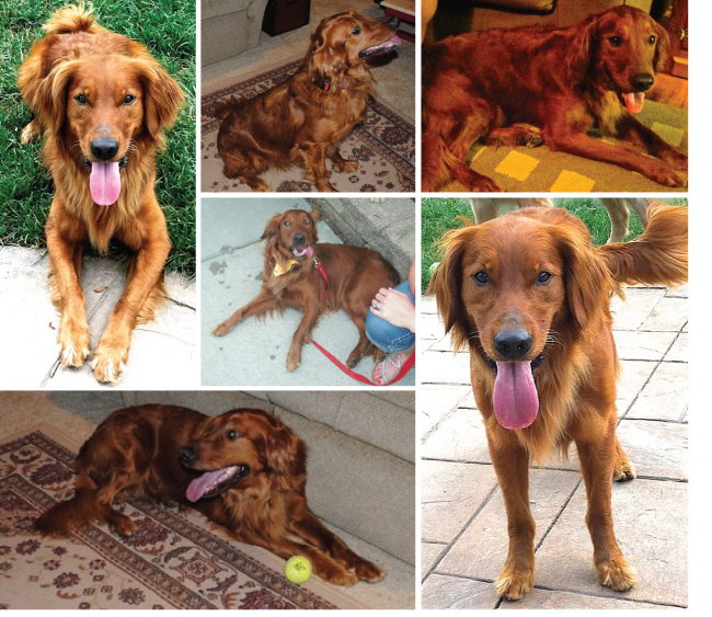 14-13 Odie Photo Collage