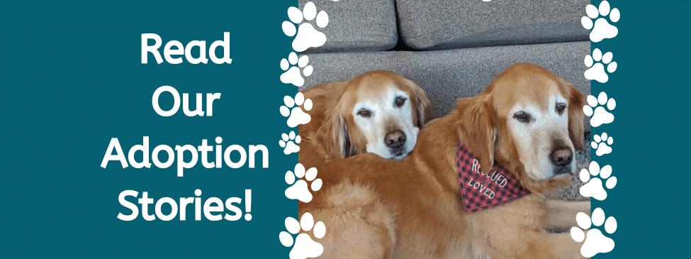 Adoption Story slider